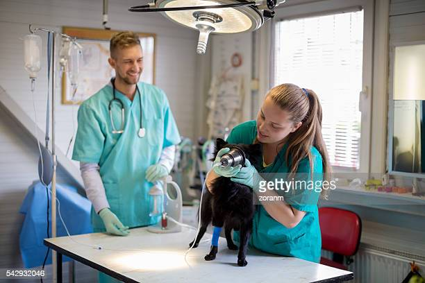 veterinarian giving dog anesthetic - anesthetic stock pictures, royalty-free photos & images