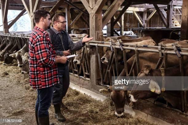 veterinario a campesino con su ganado - eslovenia fotografías e imágenes de stock
