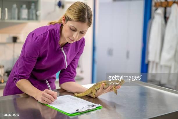lagarto de explotación veterinario - exotismo fotografías e imágenes de stock