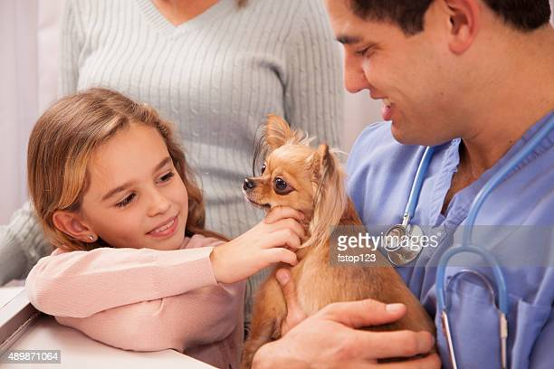 Veterinarian holds Chihuahua dog. Little girl owner pets her.