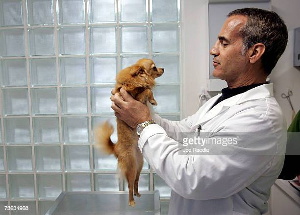 Veterinarian Michael Fusco checks Bella after her owner brought her fearing the canine was fed a tainted brand of pet food at Adams Veterinary Clinic...