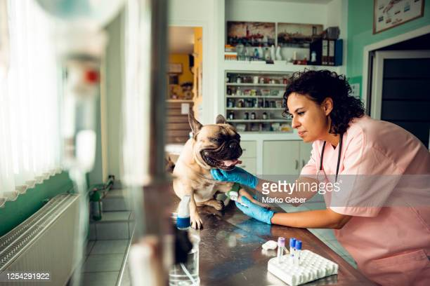 veterinarian - medicine cabinet stock pictures, royalty-free photos & images