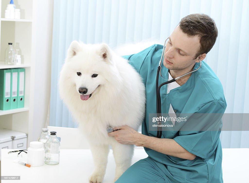 veterinarian : Stock Photo