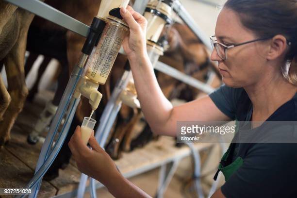 veterinarian taking goat milk sample - milk pack stock photos and pictures