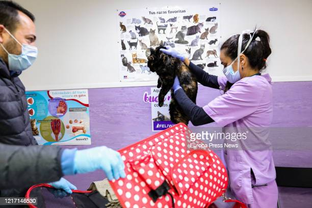 A veterinarian treats a cat at the Veterinary Hospital at the town of Alpedrete where 13 veterinarians essential health workers work during the...