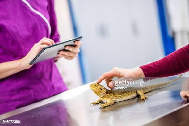 veterinarian using digital tablet - grupo mediano de animales imagens e fotografias de stock