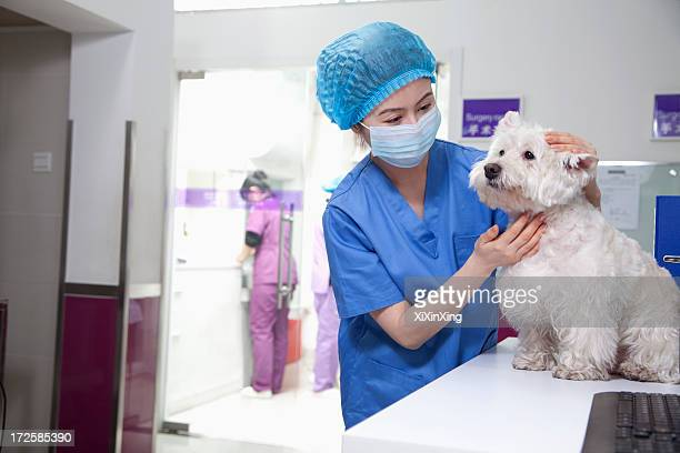 veterinarian with dog - dog mask stock pictures, royalty-free photos & images