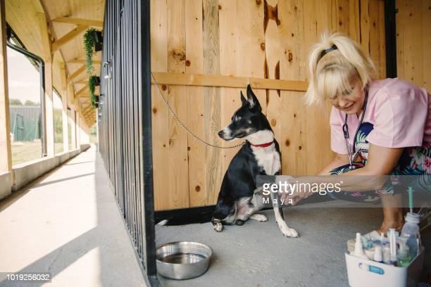 わんわん保育園で働く獣医師 - 檻 ストックフォトと画像