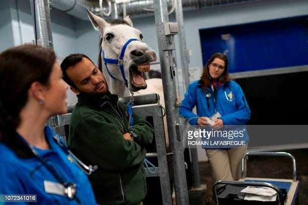Veterinarians and health staff members of the equine clinical unit 'Clinequine' stands next to a horse on November 20 in MarcyL'Etoile near Lyon...
