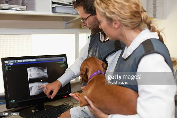 Veterinarians examining x-rays in office
