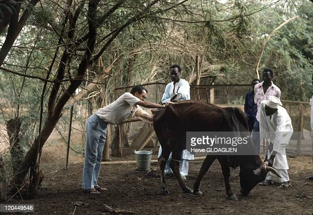 Veterinarians without borders in the Sahel in Niger in 1988 Controling the oxes to checktheir resistance against parasitics