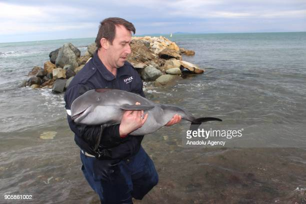 A veterinary a dead dolphin baby in Cinarcik district of Yalova Turkey on January 17 2018 Veterinaries couldn't turn the baby dolphin back to life...
