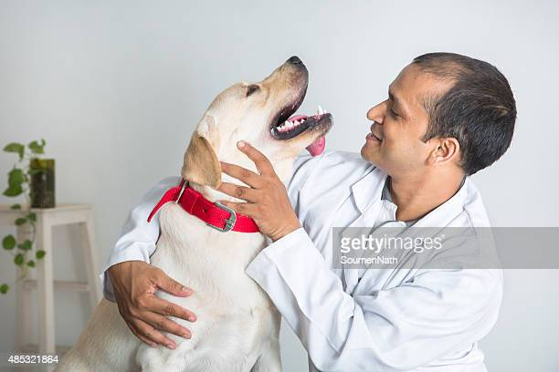 獣医師が快適な黄色ラブラドールレトリバー