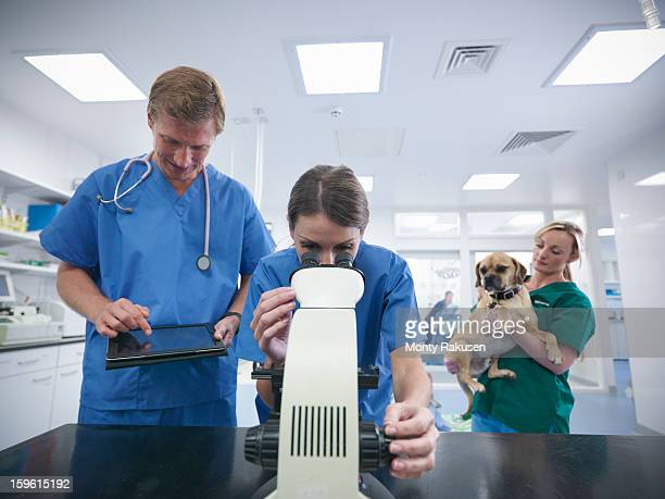 Veterinary nurse looking through microscope in veterinary practice with colleagues and dog in background