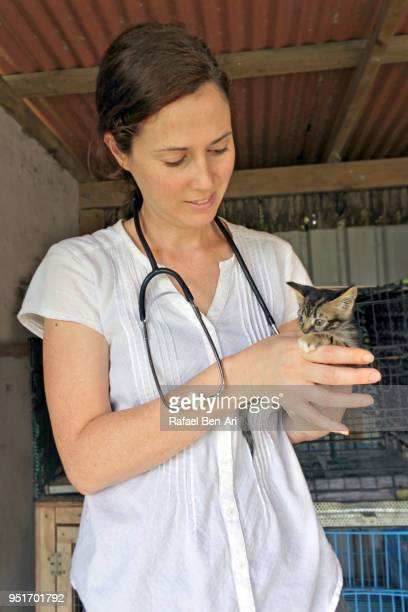 veterinary physician woman petting a kitten in animal shelter - rafael ben ari imagens e fotografias de stock