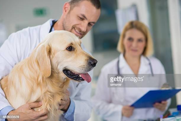 Tierärztliche Ärzte untersuchen einen Hund