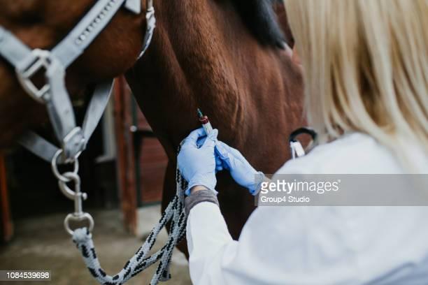 veterinária - cavalo família do cavalo - fotografias e filmes do acervo