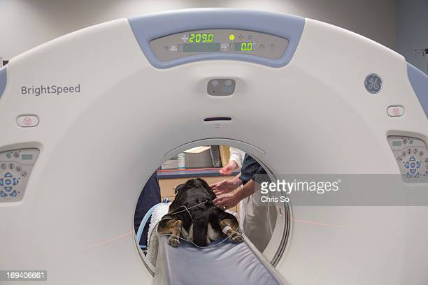 Veterinary Radiologist Dr Alex zur Linden of the University of Guelph has a discussion with Alice Daw an MRI and Radioloy Technologist regarding...