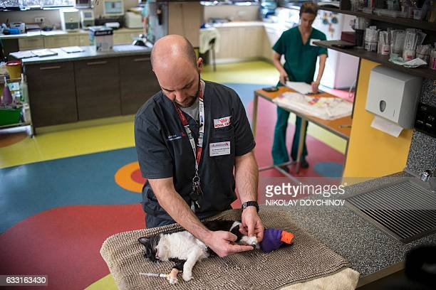 Veterinary surgeon Vladislav Zlatinov sets up a bionic paw on the eightmonthold cat named Steven in a vet clinic in Sofia on January 31 2017 Two...