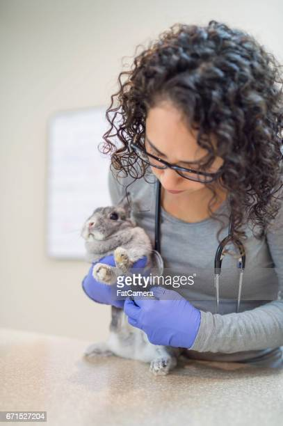 A veterinary technician gently examines a pet rabbit
