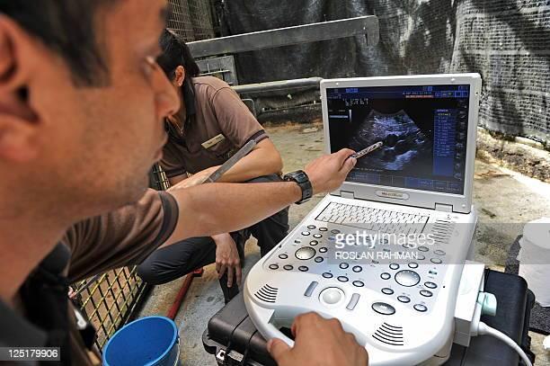 A veterinian points to an ultrasound image showing follicles of Yoko a Komodo dragon at the Singapore's Zoological garden on September 16 2011 Yoko...