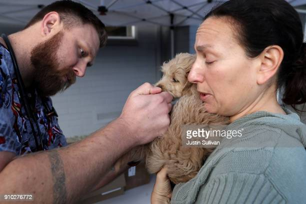 Veternarian technician Justin Jones give a dog named Sadie a canine influenza immunization as her owner Jennifer Copaken tries to keep her calm at...