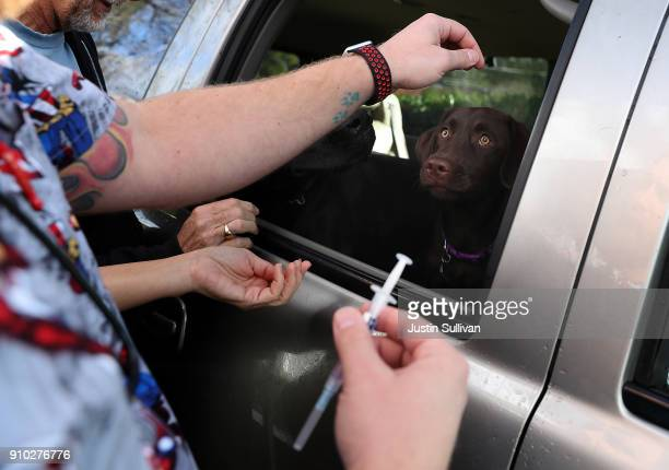 Veternarian technician Justin Jones tries to distract a dog as he preapares to give a canine influenza immunization at Los Gatos Dog and Cat Hospital...