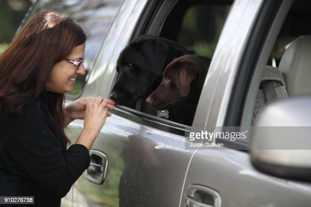 Veternarian technician Sandi Broeland greets dogs that are waiting to receive a canine influenza immunization at Los Gatos Dog and Cat Hospital on...
