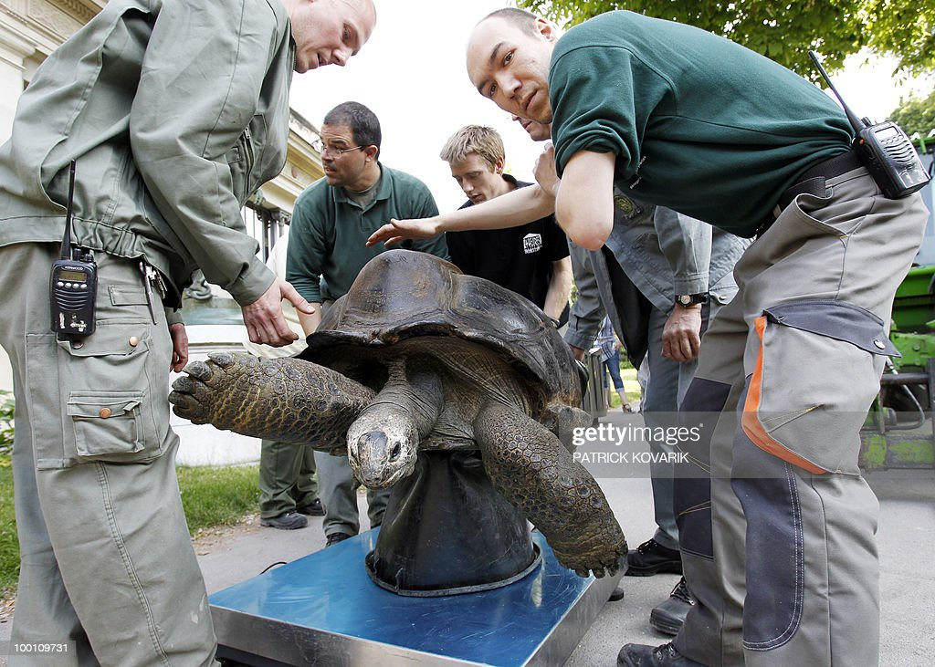 Vets and employees at the Jardin des Plantes menagerie weight 'Pericles' a giant turtle from the Seychelles, before bringing it to its summer exterior quarter on May 21, 2010. Pericles, 145 kilos, born in 1913 has been living in the Zoo since 1923.