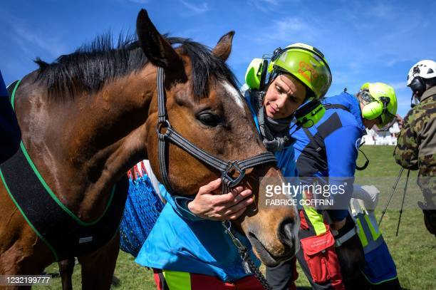 Vets prepare three horses before they are airlifted during a test by Swiss army forces on hoisting horses with a helicopter in Saignelegier on April...