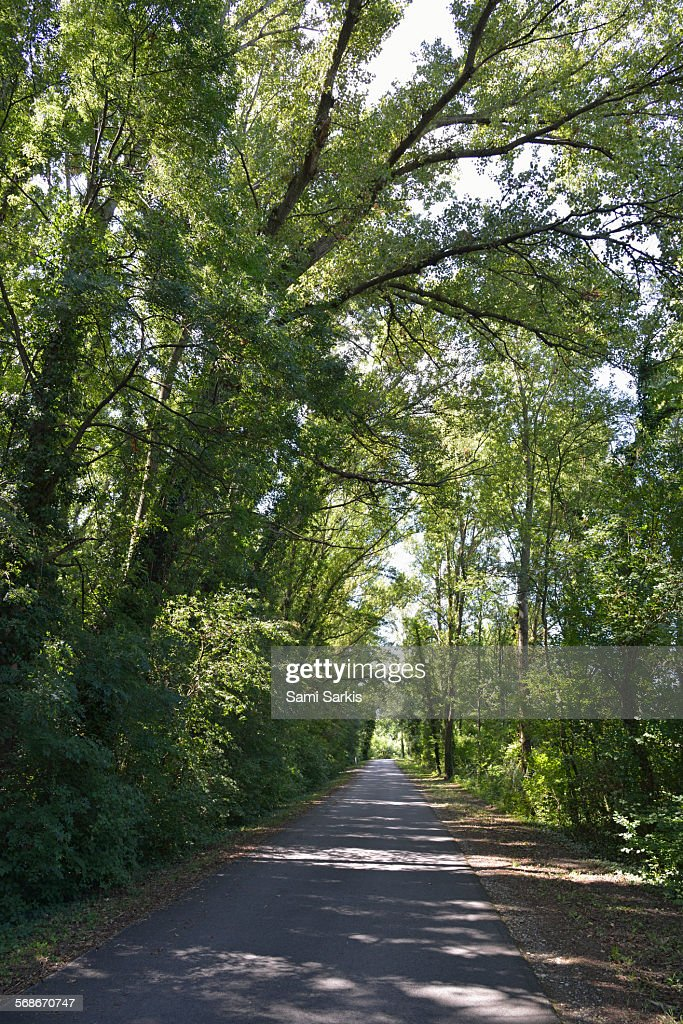 Via Rhona bicycle lane through undergrowth forest : Stock Photo