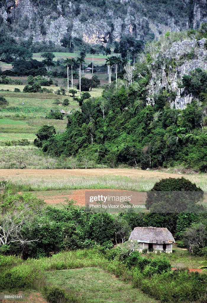 Viñales valley (Cuba) : Foto de stock