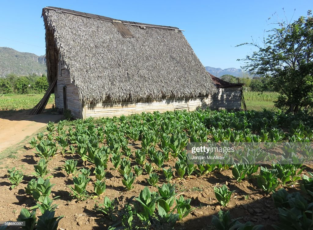 Viñales Valley Tobacco Barn, Western Cuba : Stock Photo