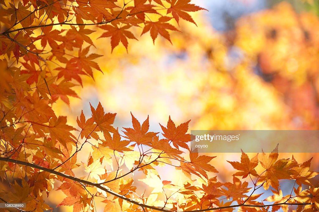 Vibrant Autumn Color : Stock Photo
