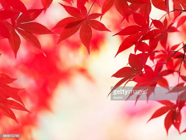 Vivaci colori autunnali