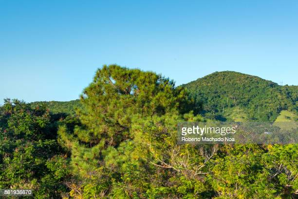 Vibrant blue and green colors in the Cuban countryside Lush green foliage small hillock covered with large and small trees all over