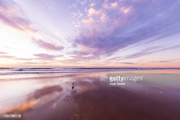vibrant colored sunrise over the ocean with clouds reflecting on the sand and a lone seagull - seascape stock pictures, royalty-free photos & images