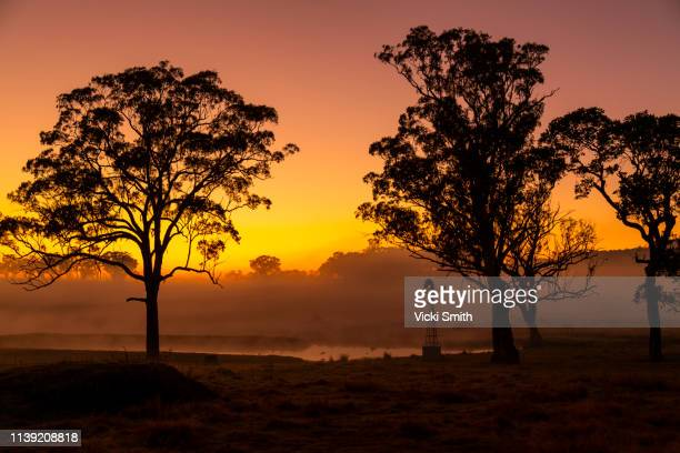 vibrant colored sunrise with tree featured - new south wales stock pictures, royalty-free photos & images