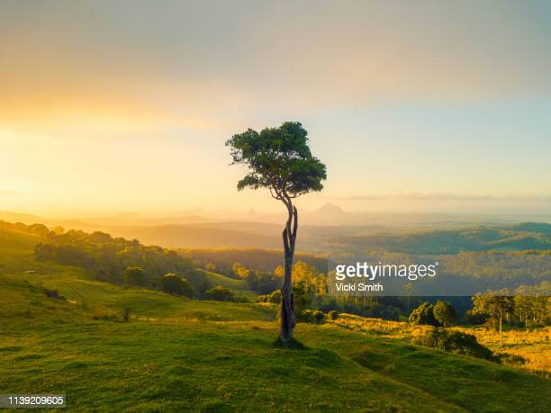 vibrant colored sunrise with tree featured - valley stock pictures, royalty-free photos & images