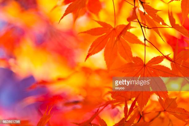 Vibrant Colors of Autumn Leaves