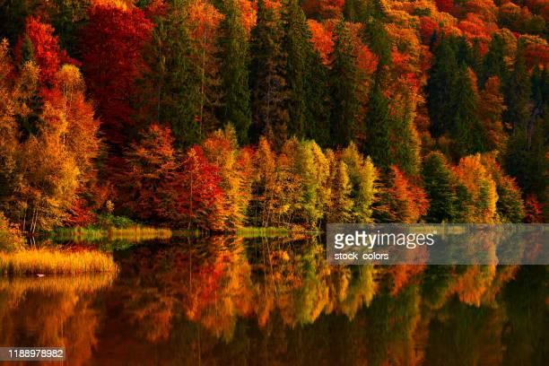 colores vibrantes de los árboles de otoño - rumania fotografías e imágenes de stock
