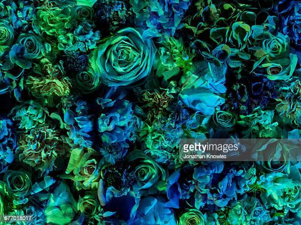 Vibrant floral arrangement, full frame