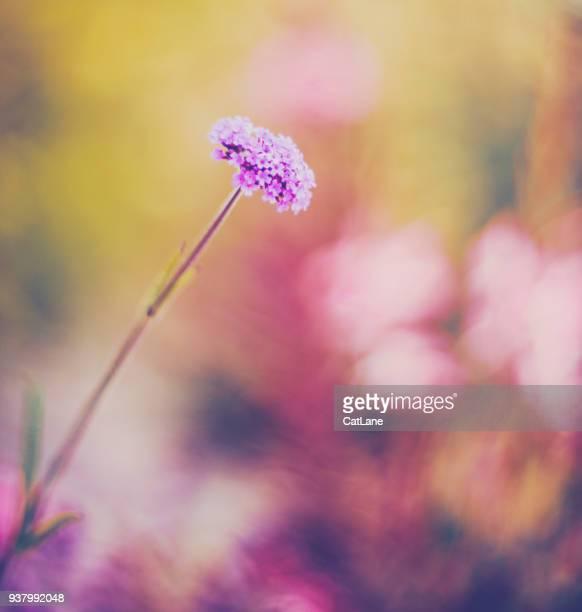 Flores vibrantes en la cálida luz del sol