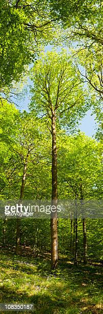 Vibrant forest vertical green tree foliage summer wilderness woods banner