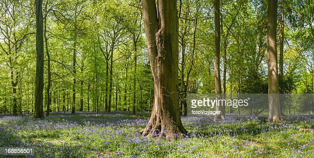 Lebendige grüne Wald Bäume in einer idyllischen Waldlandschaft panorama