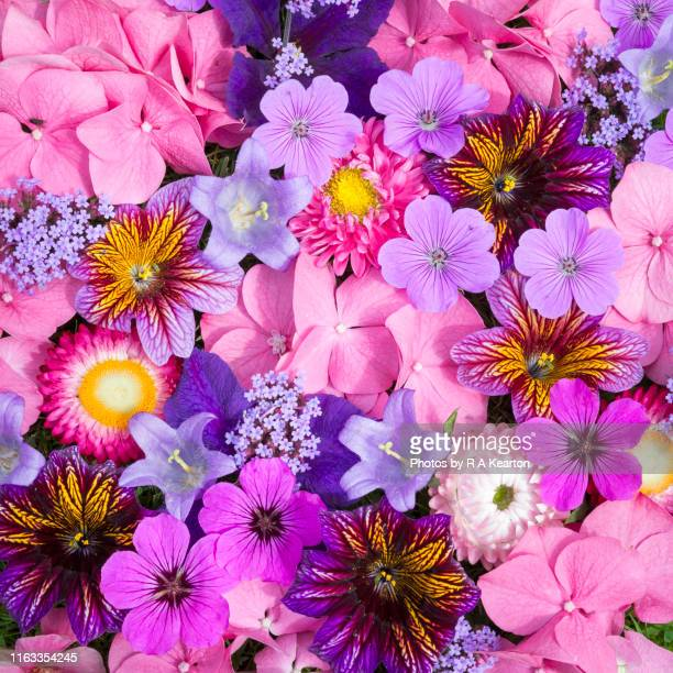 vibrant mixture of summer garden flowers - purple stock pictures, royalty-free photos & images
