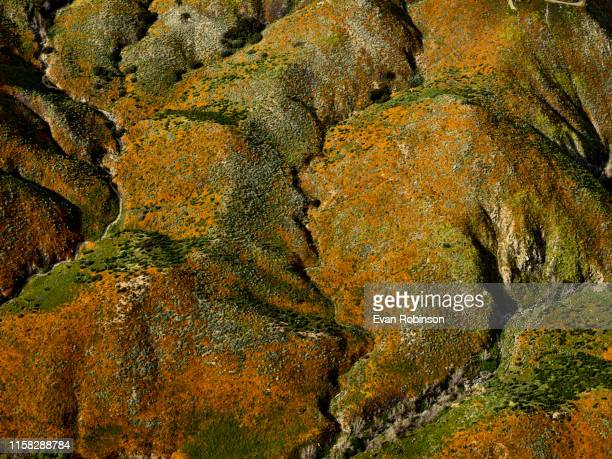 vibrant mountain - california golden poppy stock pictures, royalty-free photos & images