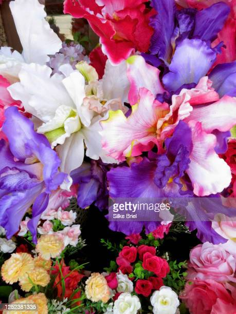 vibrant multicolor iris and roses - briel stock pictures, royalty-free photos & images