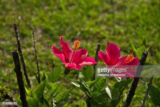Vibrant pink tropical orchids