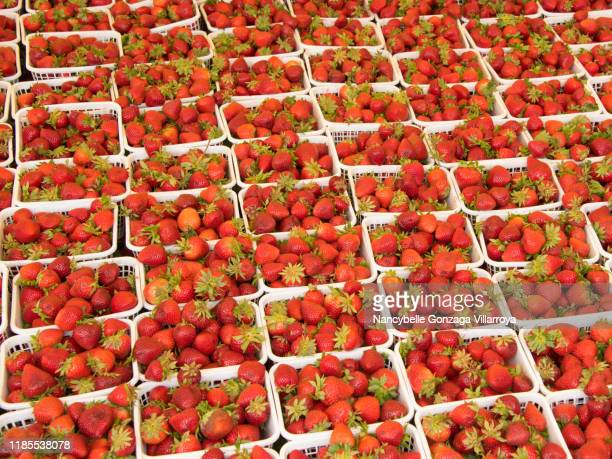 vibrant red coloured strawberries in containers for sale in a fruit market - mississauga stock pictures, royalty-free photos & images